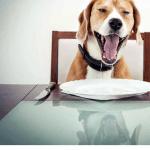Hond of huisdier toegelaten op restaurant?
