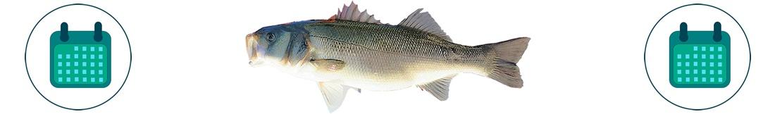 Aankoop Vis seizoenskalender