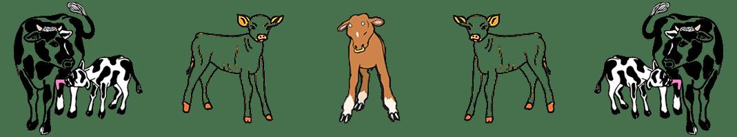 banner kalfsvlees